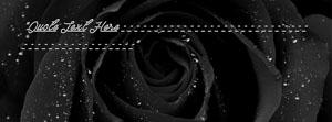 Black Rose Name Cover