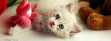 Cat Cute Cover Photo FB
