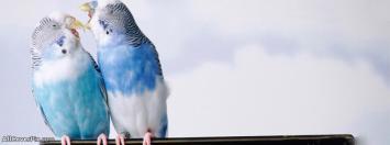 Birds FB Cover Photos