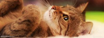 Cats and Tigers Cover Photos