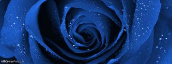 Amazing Blue Rose Facebook Cover