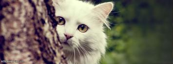 Beautiful Cat Facebook Timeline Cover Photos
