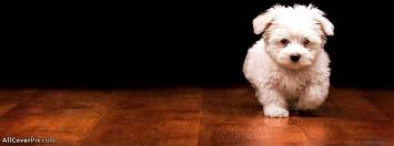 Beautiful Cute Puppy Facebook Cover Photos