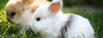 Beautiful Rabbit Facebook Cover Photos