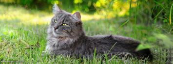 Beautiful Yellow Eyes Cat Cover Photos Fb