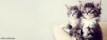 Blue Eyes Cat Facebook Cover Photos