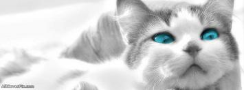 Blue Eyes Cute Cat Facebook Cover Photos