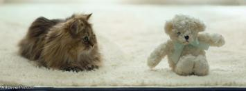 Cat and Teddy Facebook Cover Photo