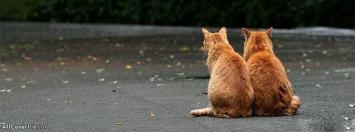 Couple Cat Facebook Cover Photos