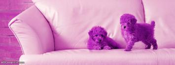 Cute Puppies Facebook Cover