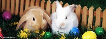 Cute Rabbit Facebook Animals Cover Photos