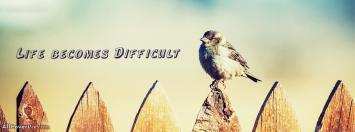 Cute Sparrow Cover Photos Fb