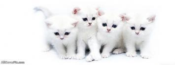 Cutest Facebook Cats Cover Photos