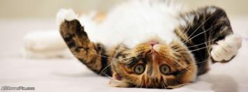 Facebook Cute Cat Cover Photos