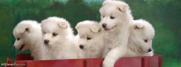 Facebook Cute Dogs Cover Photos