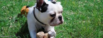 Facebook Dogs Cover Photos