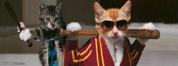 Facebook Funny Cat Cover Photos