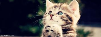 Facebook Sweet Cute Cat Cover Photo