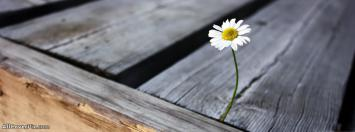 Facebook Timeline Flowers Cover Photo