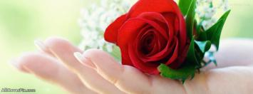 Red Rose in Hand Facebook Cover