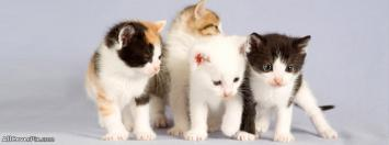 So Cute Kittens Facebook Animals Covers Photo