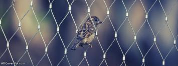 Sparrow Facebook Cover Photos