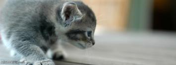 Sweet Cat Facebook Pets Cover Photos
