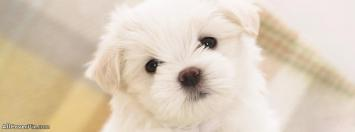 Sweet Puppy Facebook Covers Photo