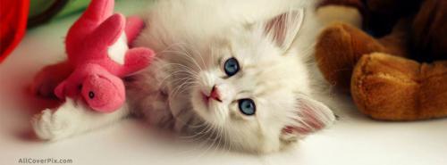 Cat Cute Cover Photo FB -  Facebook Covers