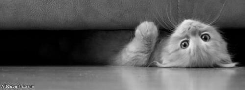 Cute Kitty Covers Photos Of Cats -  Facebook Covers