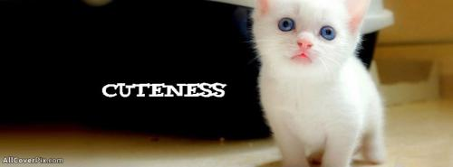 Cute Animals Photos for Facebook -  Facebook Covers