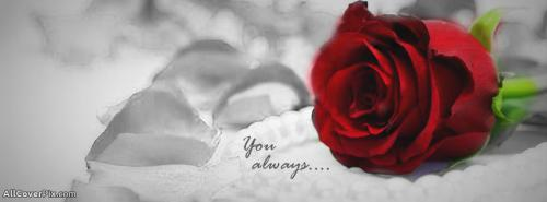 Love Rose Cover Photos -  Facebook Covers