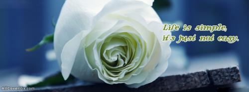 Awesome Flower Photos For Facebook Timeline -  Facebook Covers