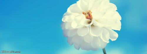 Beautiful White Flower Cover Photo Fb -  Facebook Covers