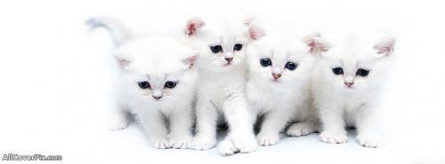 Cutest Facebook Cats Cover Photos -  Facebook Covers